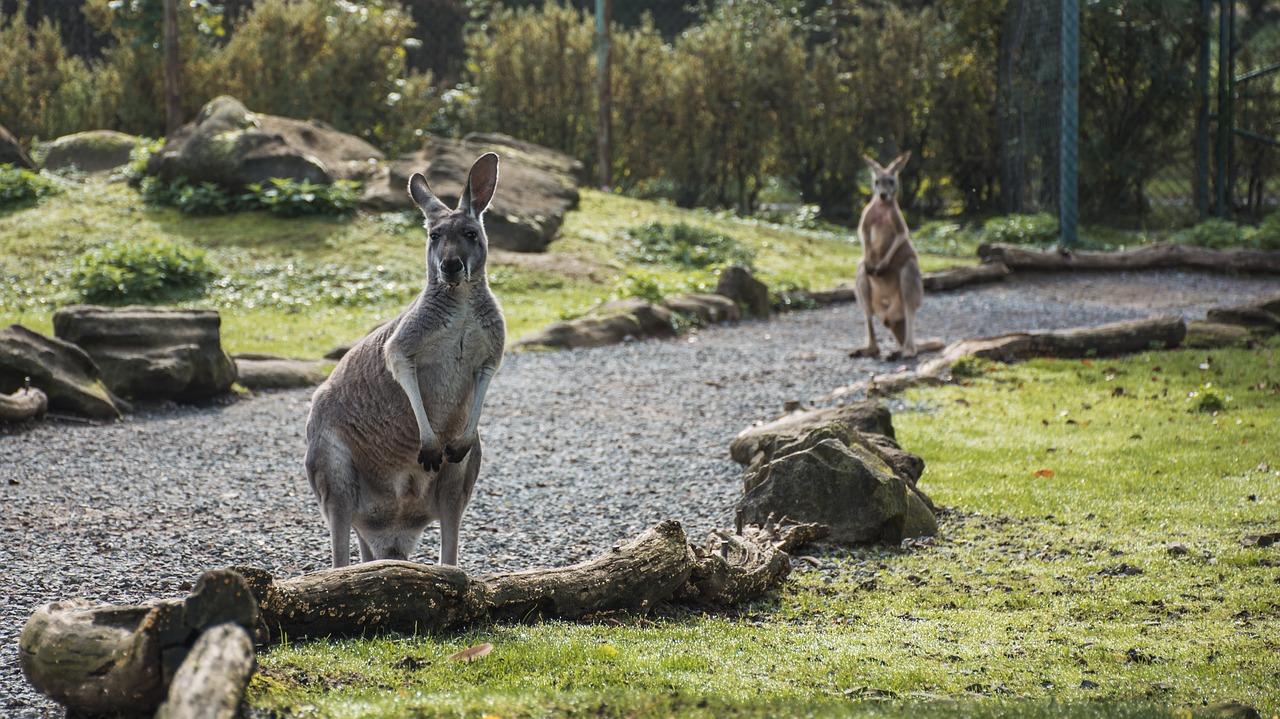 Australia eTA