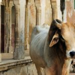 India and sacred places and beliefs